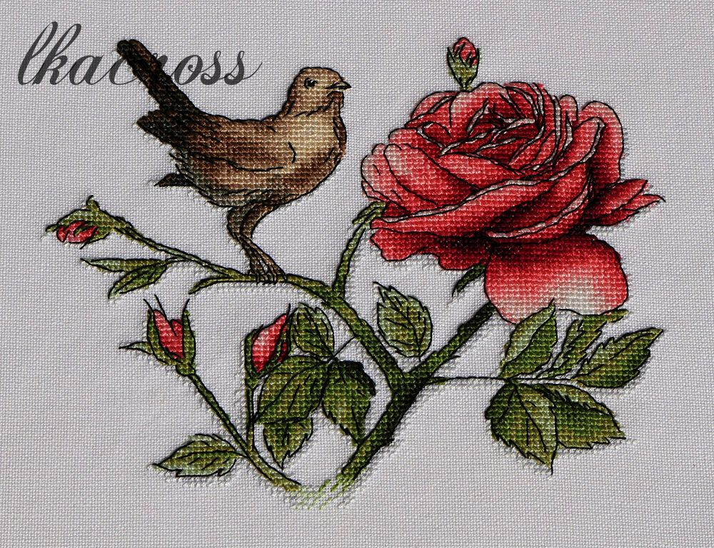 nightangle the rose
