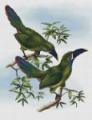 "Cross stitch pattern ""Toucans""."